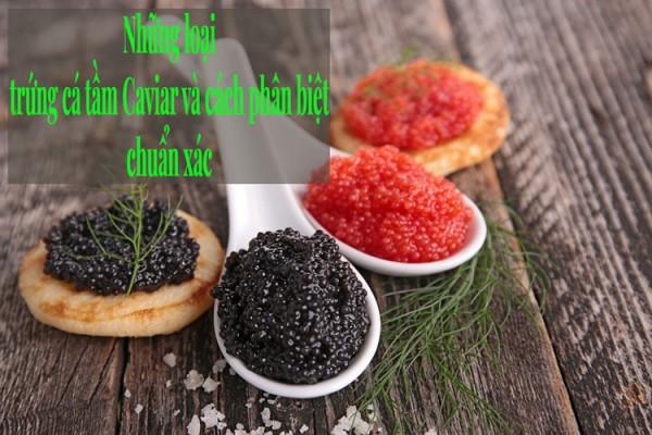 Những loại trứng cá tầm Caviar và cách phân biệt chuẩn xác