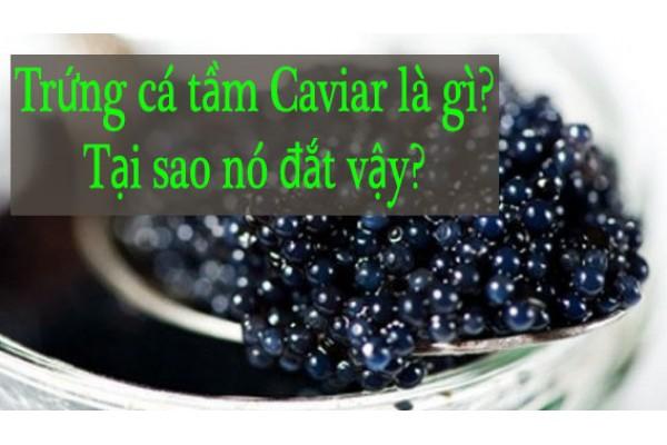 Trứng cá tầm Caviar là gì? Tại sao nó đắt như vậy?