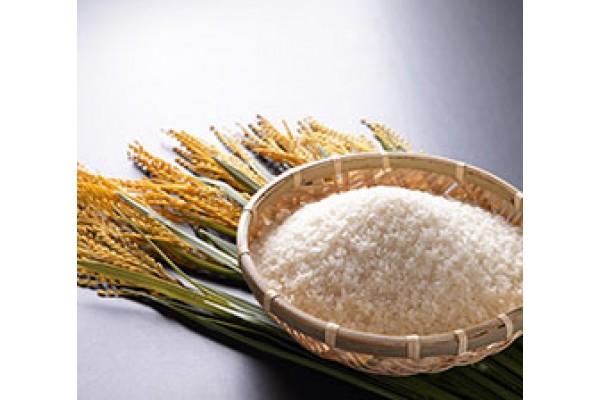Gạo Nhật Bản cao cấp nhập khẩu 100%