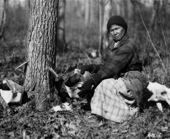 Người Mỹ bản địa là người đầu tiên sản xuất siro cây Phong