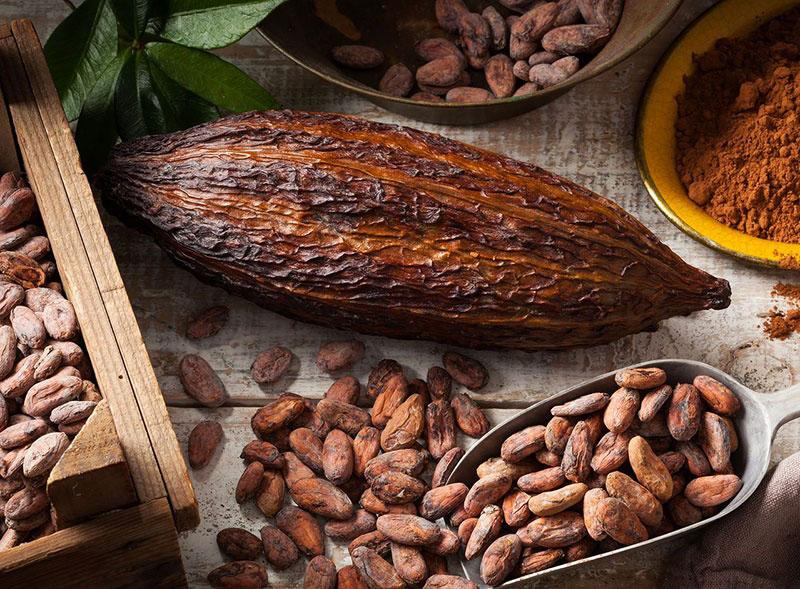 Hạt Cacao thô có chỉ số chống Oxy hóa cao nhất