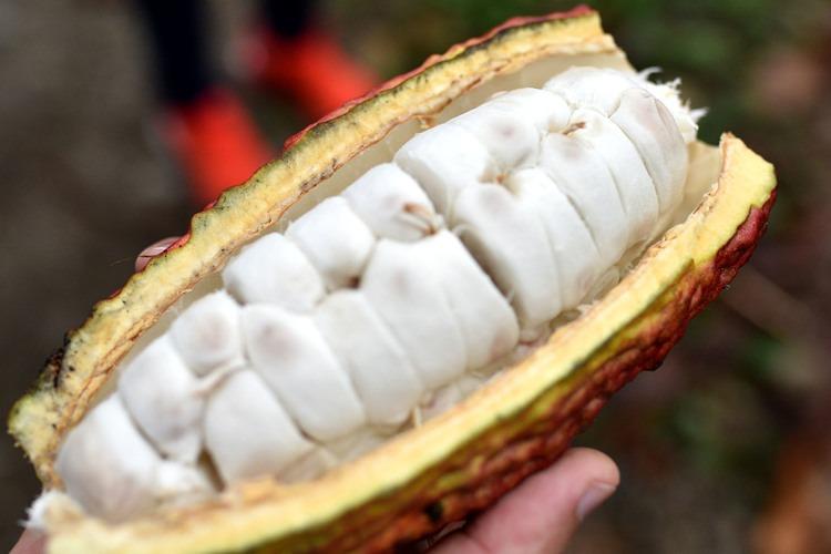 Quả Cacao tách vỏ