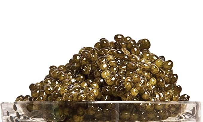 Trứng cá tầm Osetra Caviar